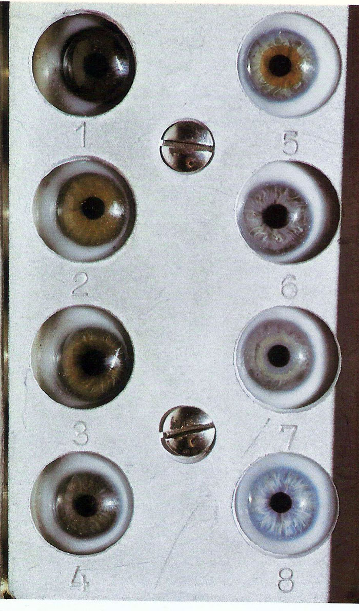eye color Martin-Saller scale