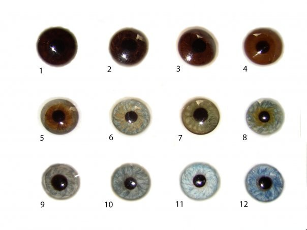eye color Bunak scale